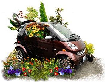 условия доставки растений